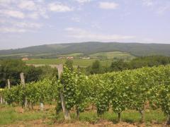Vlado Krauthaker's vineyards, Kutjevo