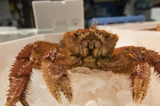 crab chilling